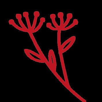 fleurs-site_Plan de travail 1.png