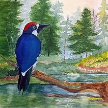 acorn woodpecker 2.jpg
