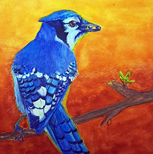 Bluejay _NewSprout_6x6 watercolor aquabo
