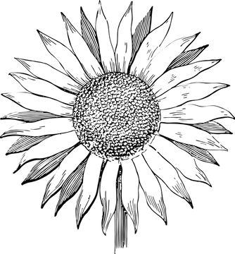 sunflower-2507845_960_720.png