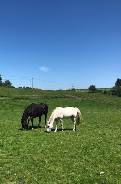 horsesjune18