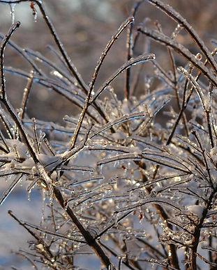 winter.newsletter.jpg