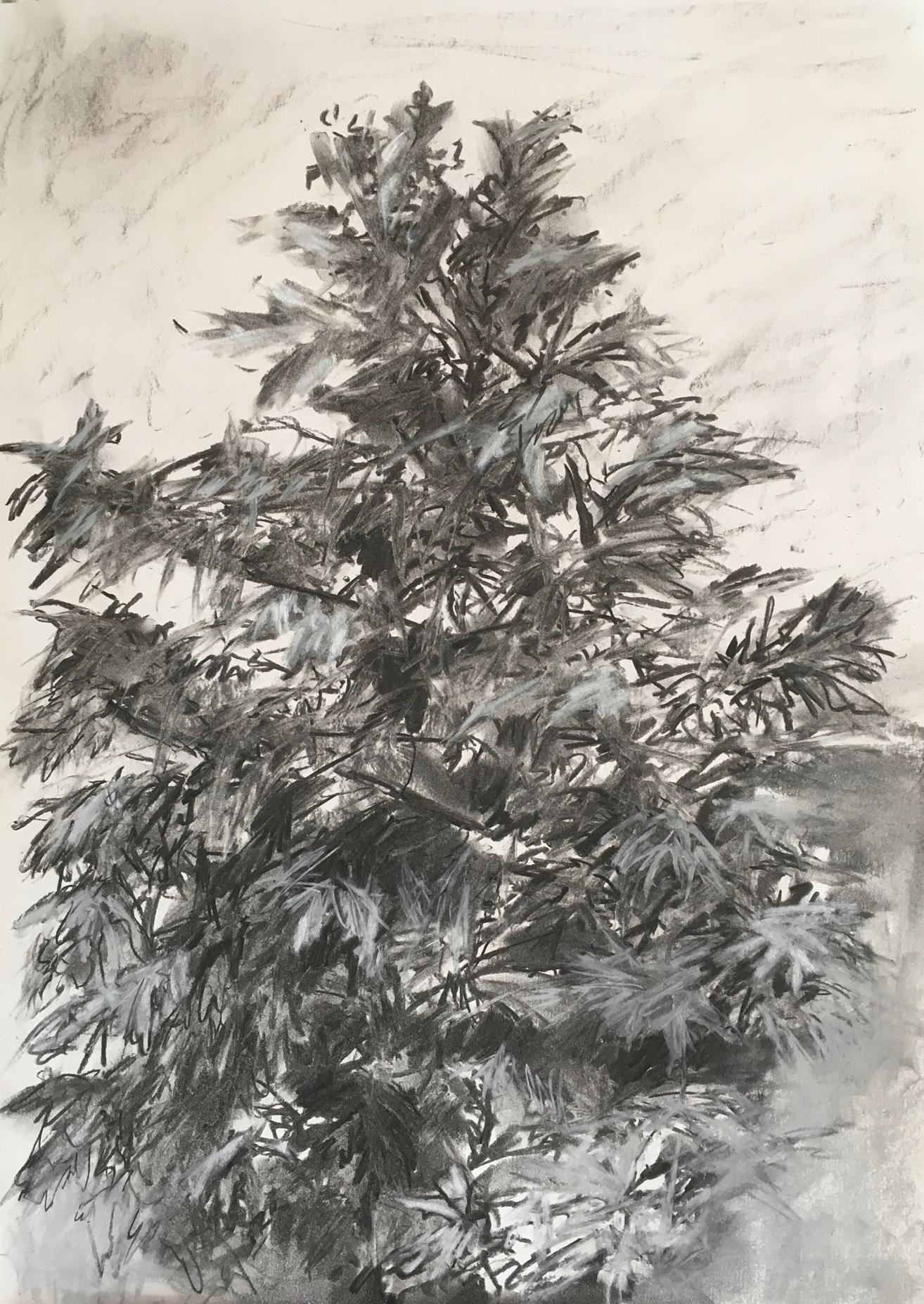 Study of a Tree in Cocconato