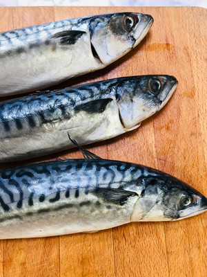 Fresh mackerel ready for filleting, fish skills