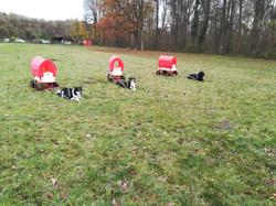 1. Zughundetraining SVÖ OG23