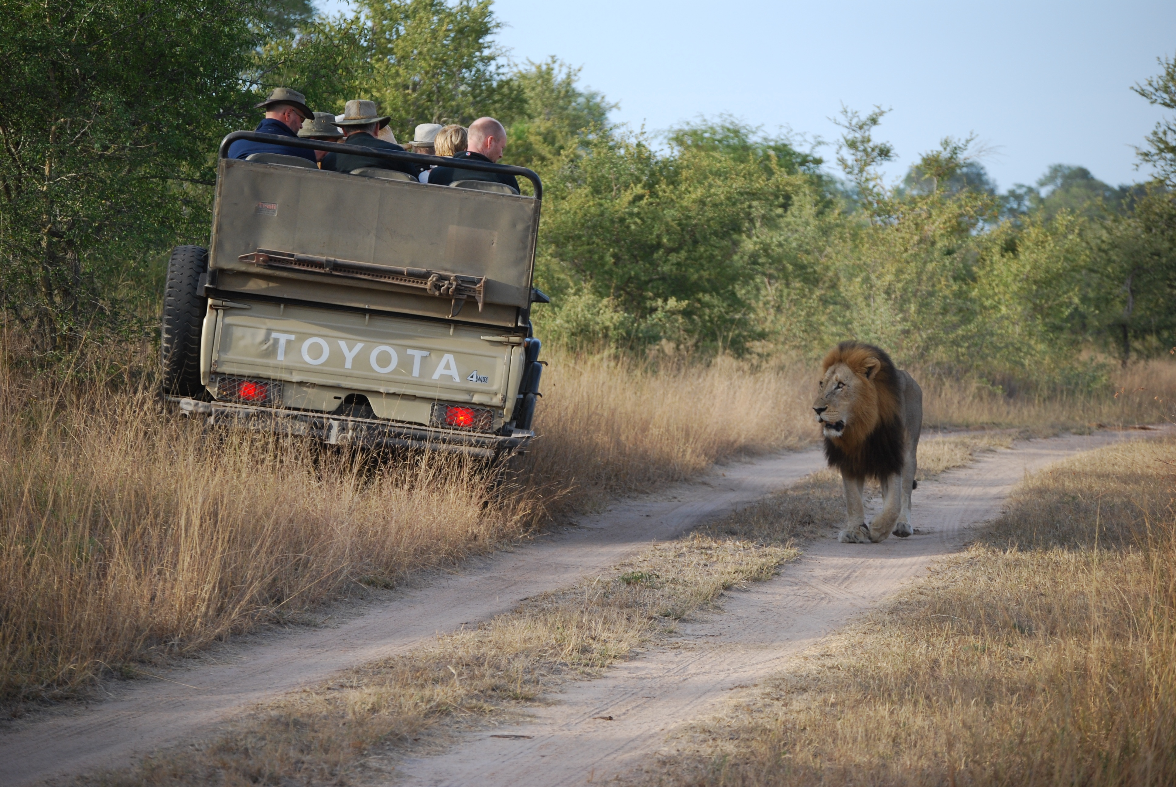 safari-935927