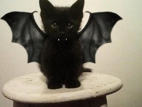 Halloween Dress Up Isn't Just For Kids