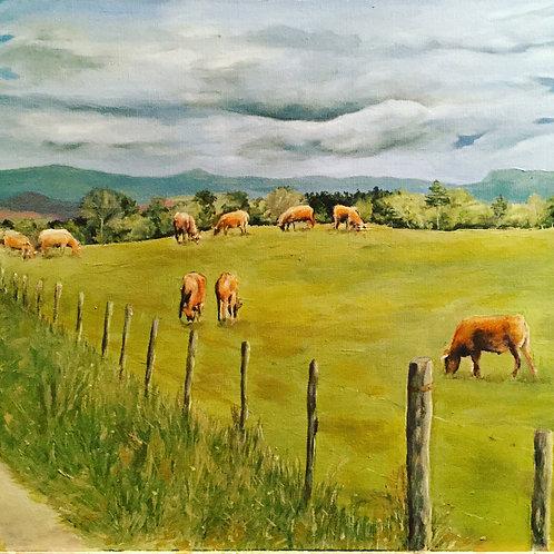 Les vaches d'Auvergne #2