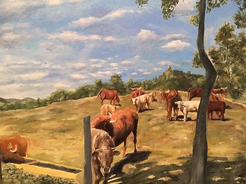 Les vaches d'Auvergne #1