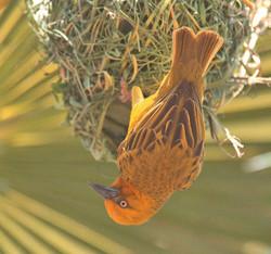 Weaver & Nest