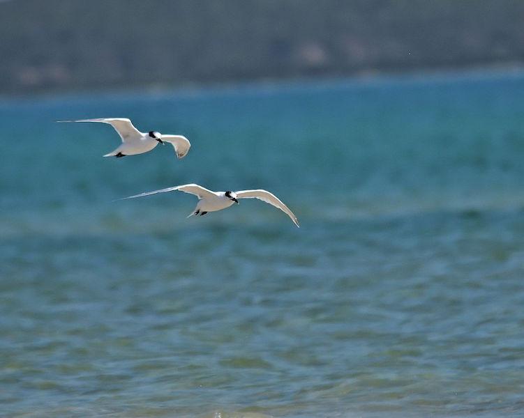 Flamingo Flight