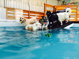 ALL PUPS INTO THE POOL!
