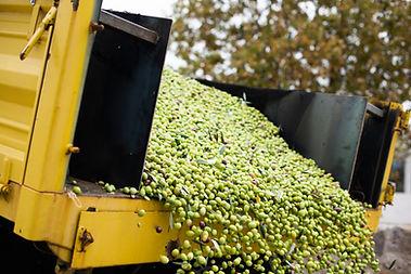 fabrikaya gelen hasat.jpg