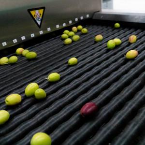 Tüm zeytinleri tek tek kontrol ediyoruz