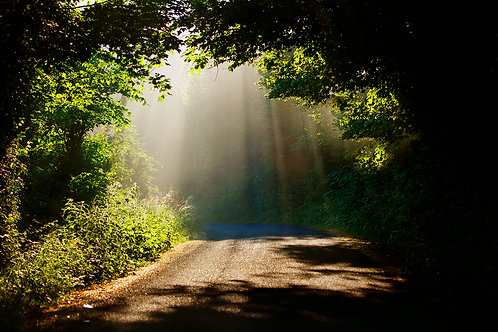Shafts of Light on the Shannon Road