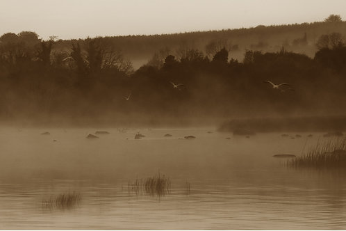 Misty Morning on Lough derg