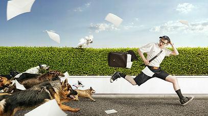 עורך דין תקיפת בעל חיים | נשיכת כלב תביעה | אושיק אליהו משרד עורכי דין