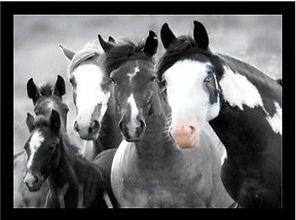 HORSES_POINT_VIEW.jpg