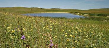 Prairie Pothole Region-  .png