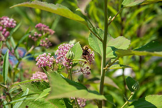 Stop 6_FJF USDA Garden_pollinator copy.j