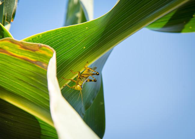 FJF USDA Garden_pollinator-2446 copy.jpg