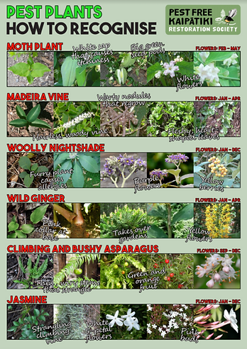 image of flyer showing 6 pest plant speciesPNG