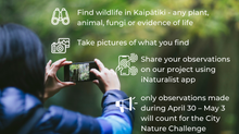 Join PFK's Nature Challenge