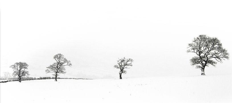 Winter scape 9x4.jpg
