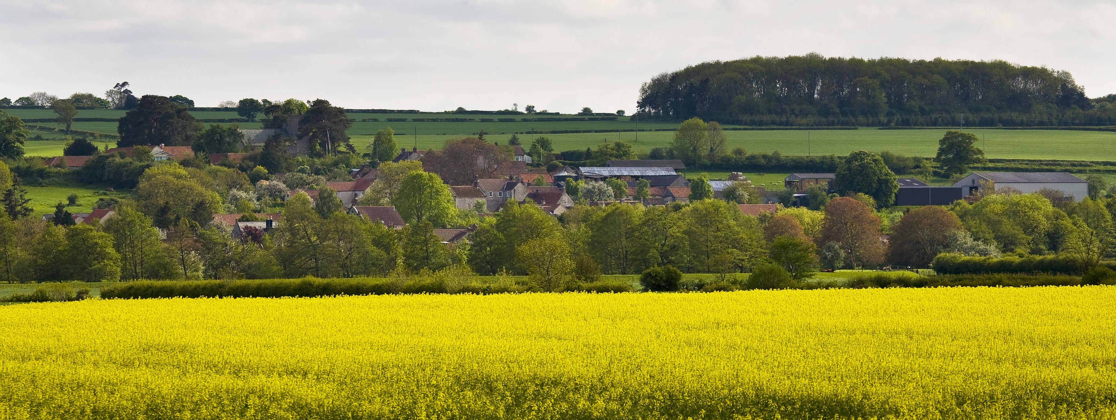 TraceyPhillipsNunnington Village RAPESEA