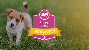 Dog Training College announces new Puppy Class Instructor Course