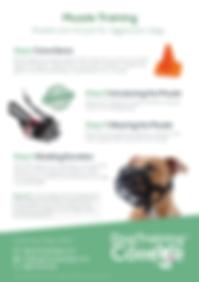 Dog Training College Muzzle Training Fly