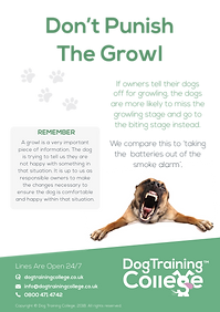 Dog Training College Growl Flyer.png