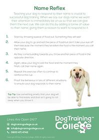 Dog Training College Name Reflex Flyer.p