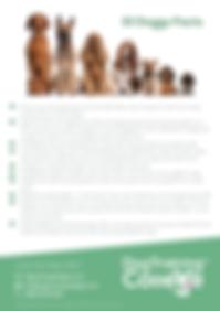 Dog Training College Doogy Facts Flyer.p