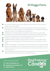 Dog Training College Doogy Facts Flyer.p