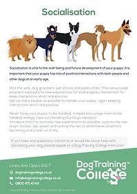 Dog Training College Socialisation.png