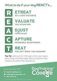 Dog Training College REACTs Flyer.png