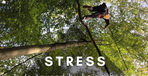 Tree-walking: My X-treme Mindfulness Experience