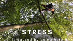 Tree-walking: My X-treme Mindfulness Experience