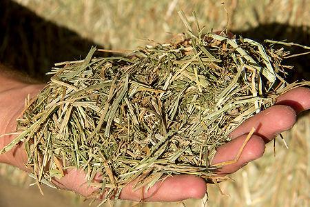 Ray grass Profopal deshitratación de forrajes