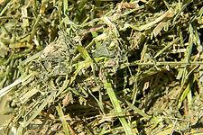 Alfalfa deshidratada  Profopal deshidratación de forrajes