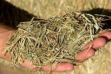 Ray Grass. Profopal, deshidratación de forrajes