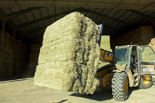 Ray grass Profopal deshidratacion de forrajes