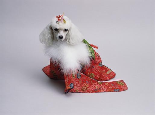Japan : Canine Prêt à Porter