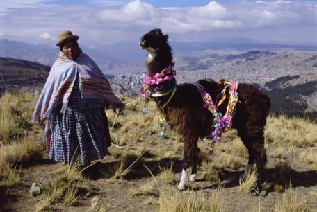 Bolivia : Silence of the Llamas