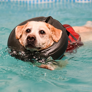 Jake's Hydrotherapy Session