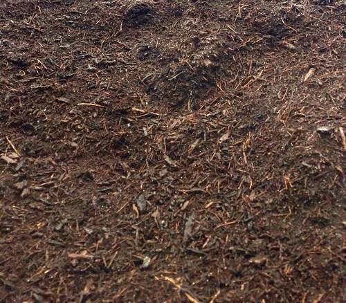 Premium Oak Bark