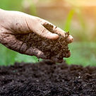 Compost 001.jpg