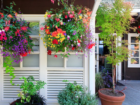 Bask in the Glory of Hanging Baskets