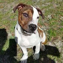 AdoptionAdultPuppy.webp